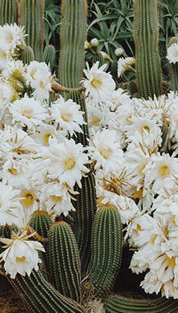 decoration-exterieur-balcon-terrasse-cactus